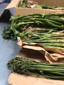 新潟県妙高高原の山菜